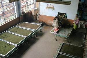 процесс ферментации чая