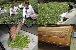 Что такое ферментация чая