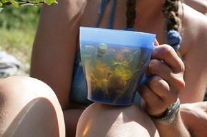 применение курильского чая
