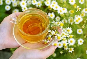 Секреты и рецепты целебного чая с ромашкой